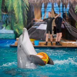 Дельфинарии, океанариумы Коренево