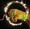 Цирки в Коренево