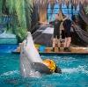 Дельфинарии, океанариумы в Коренево