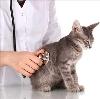 Ветеринарные клиники в Коренево